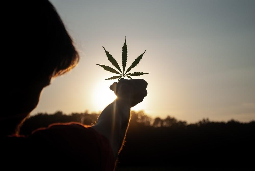Cannabis leaf held towards sunset